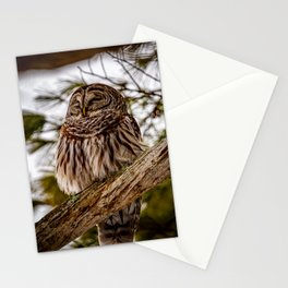 Barred owl perched in the treetops off the Otsego lake coast in Cooperstown, New York Stationery Cards