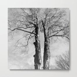 Pair of Trees (Black and White) Metal Print