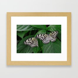 Large Tree Nymph Butterfly Framed Art Print