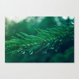 EVERGREEN TREE TWIG Canvas Print