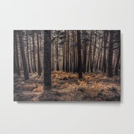 Forest #10 Metal Print