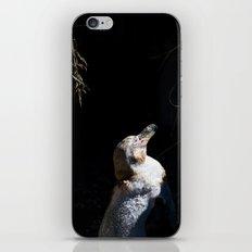 Spheniscus Humboldti III iPhone Skin