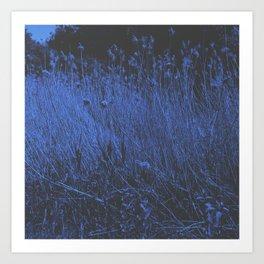 Blue Jay Whey Art Print