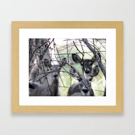 Deer, Washington Grove Framed Art Print