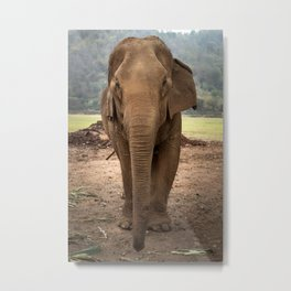 Marnie the Elephant Metal Print