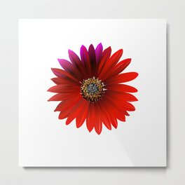 crimson flowers Metal Print