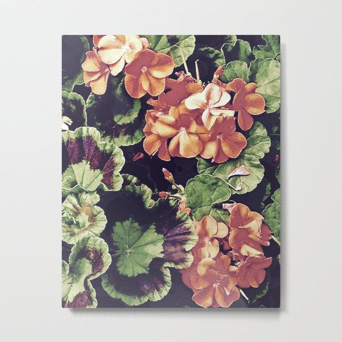 Cottage Kitchen Geraniums Metal Print