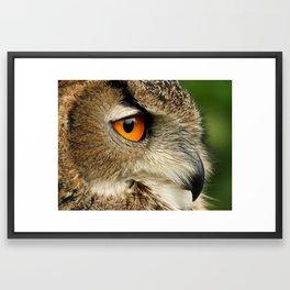 Eye of the Eagle Owl Framed Art Print