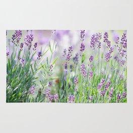 Lavender in summer garden Rug