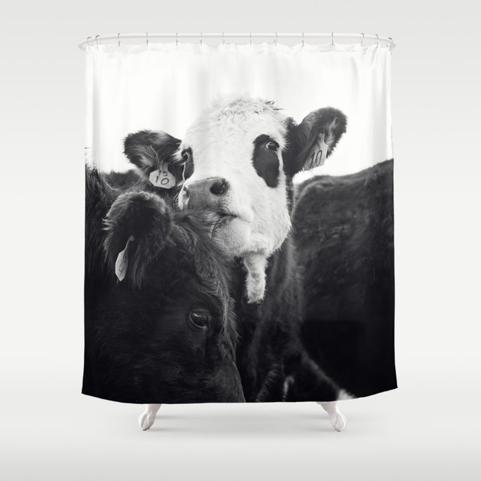 Kissing Cows Print Shower Curtain By Applesandoatsphotography