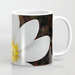 Spring woodland wildflower:  bloodroot, Sanguinaria Coffee Mug