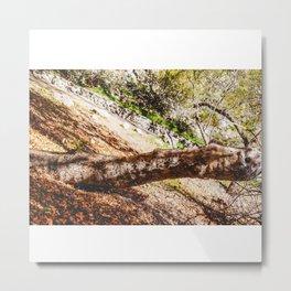 Tree Root in Arizona Metal Print