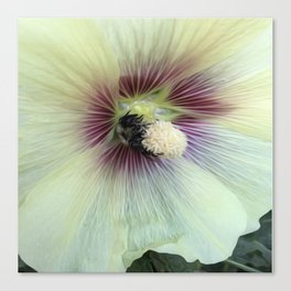 Bee Amazing Canvas Print