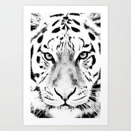 White Tiger Print Art Print
