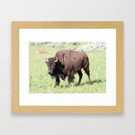 King of the Range Framed Art Print