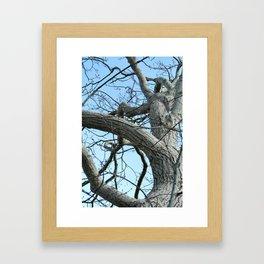 Winter Tree in Beverly, MA Framed Art Print