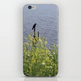 Red-winged Blackbird iPhone Skin
