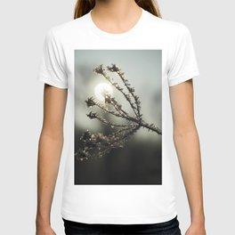 Winter sun T-shirt