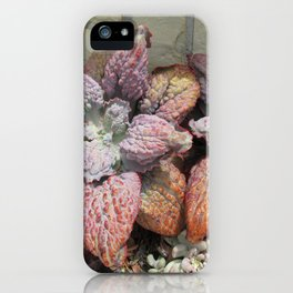 Rainbow succulent iPhone Case