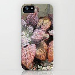Rainbow succulent iPhone Case