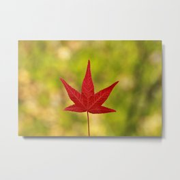 A Canadian Autumn II Metal Print