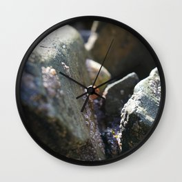 Sea Snails Grazing on Ocean Weathered Rocks with Barnacles Wall Clock