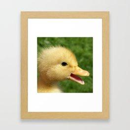 small duckling Framed Art Print