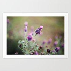 Lavender Life Art Print