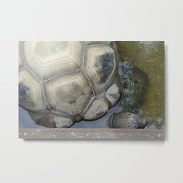 Tortoise at the Zoo Metal Print
