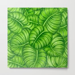 Calathea leaves Metal Print