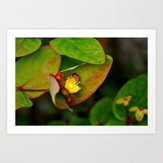 Blossom Revealed Art Print