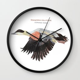 Common eider Wall Clock