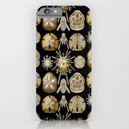 Ernst Haeckel - Scientific Illustration - Echinidea (Sea Urchins) iPhone Case
