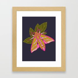 Nature moth - elephant hawk moth with leaves Framed Art Print