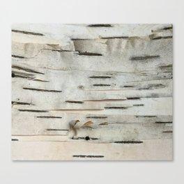 Birch Tree Bark Canvas Print