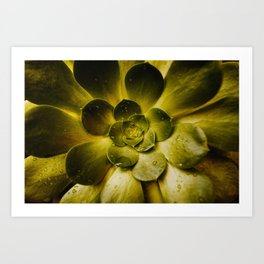 Details in the Succulent Art Print