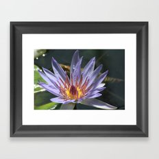 a flower  Framed Art Print
