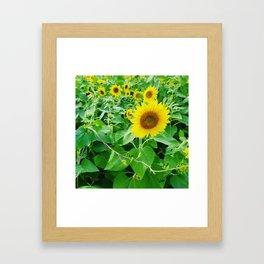 Bright suns Framed Art Print