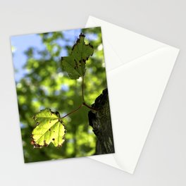 The Lone Leaves Photography Stationery Cards