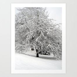 Snow-Covered Apple Tree Art Print