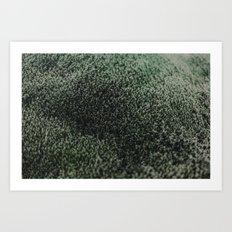 Icelandic Moss Art Print