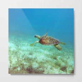 Watercolor Turtle, Green Turtle 05, St John, USVI Metal Print