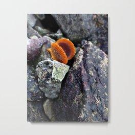 Chlamys Metal Print