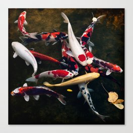 too many to  choose from Canvas Print