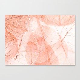 Sun Bleached Apricot Canvas Print