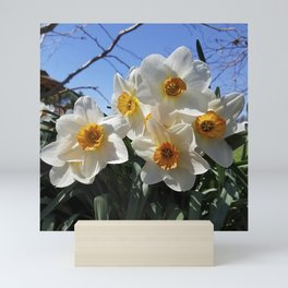 Sunny Faces of Spring - Gold and White Narcissus Flowers Mini Art Print