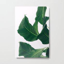 Monstera green plant photo Metal Print