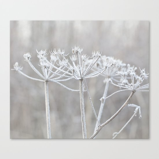 cow parsley plant  with hoarfrost in winter Canvas Print