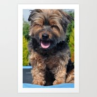 yorkie Art Prints featuring Yorkie by Sammycrafts