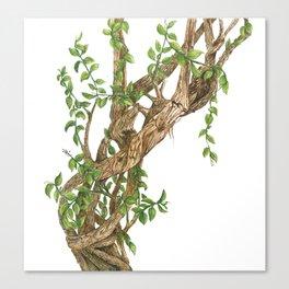 Twisting woods Canvas Print